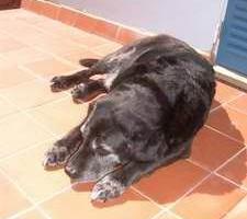 Labrador Health – An introduction