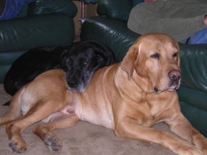Best Friend Lost to Lyme's Disease