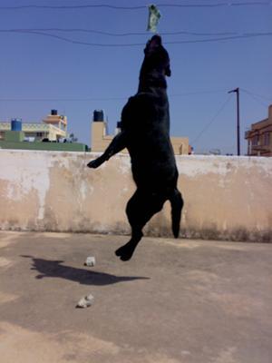 high jump champ!!!!!!