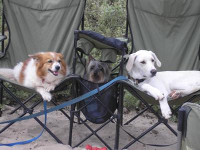 Camping- Sadie Kola, Percy and Jake