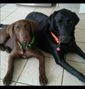 Two labs is better than one
