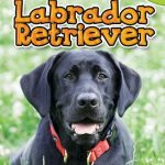 Labrador-Retriever-Top-Dogs-Scholastic-0