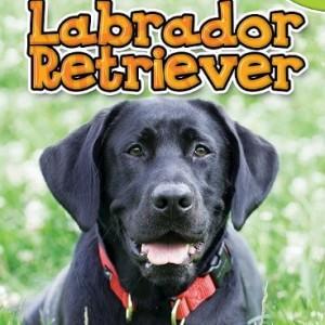 Labrador-Retriever-Top-Dogs-Scholastic-0